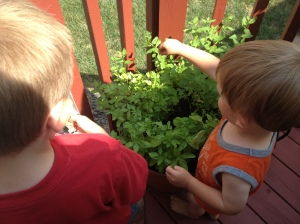 Planting basil and parsley are a great first garden options for kids (and adults)!