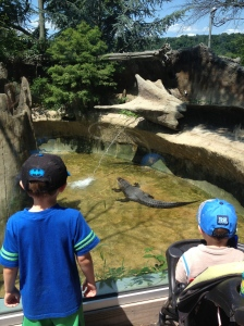 The boys loved seeing the alligator at Turtle Back Zoo!