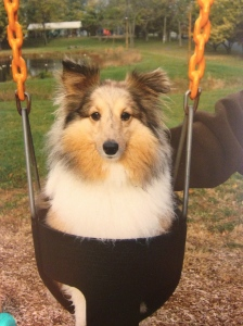 How many dogs would let you put them in a swing at the playground?