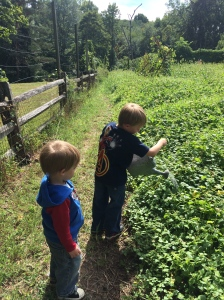 Fosterfields Living Historical Farm offers opportunities for kids to learn about daily work on a farm!