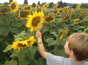 Tyler loved looking for all the pollinators!