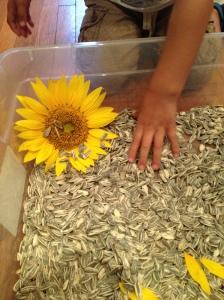 Sunflower Bin