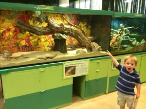 My son loved seeing all the different snakes and lizards!